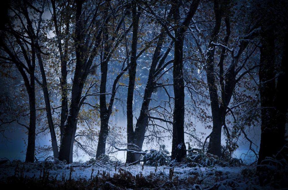 David Jordan Williams - Mountains & Trees
