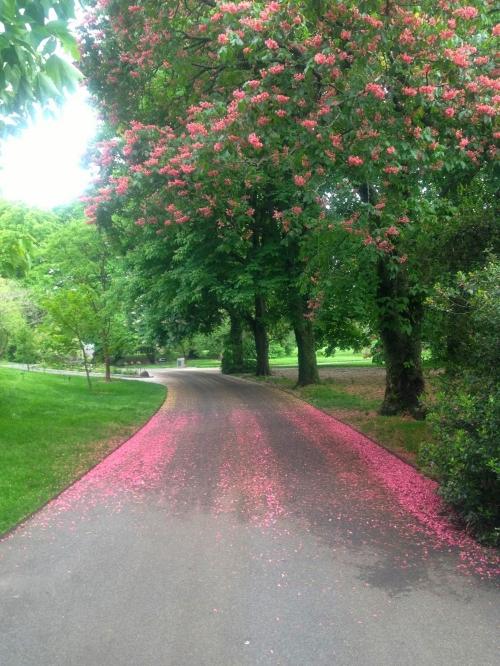 Brooklyn Botanic Garden, Molly Caldwell 2015