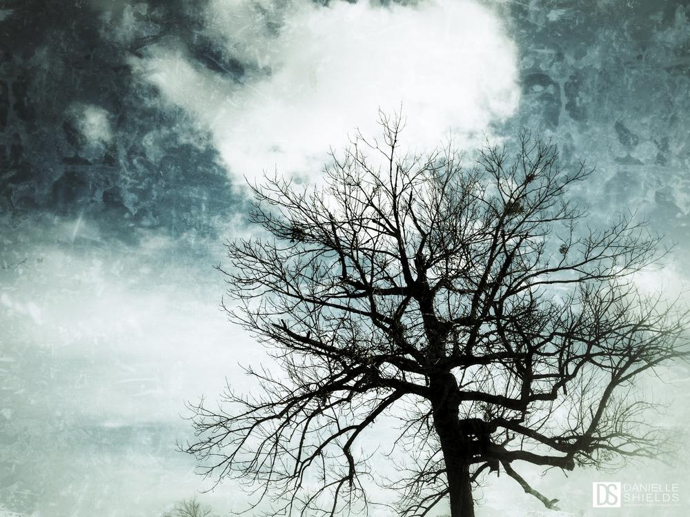 Tree Snap 21.jpg