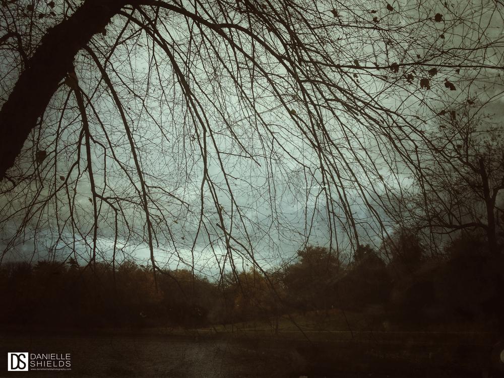 Tree Snap 3.jpg