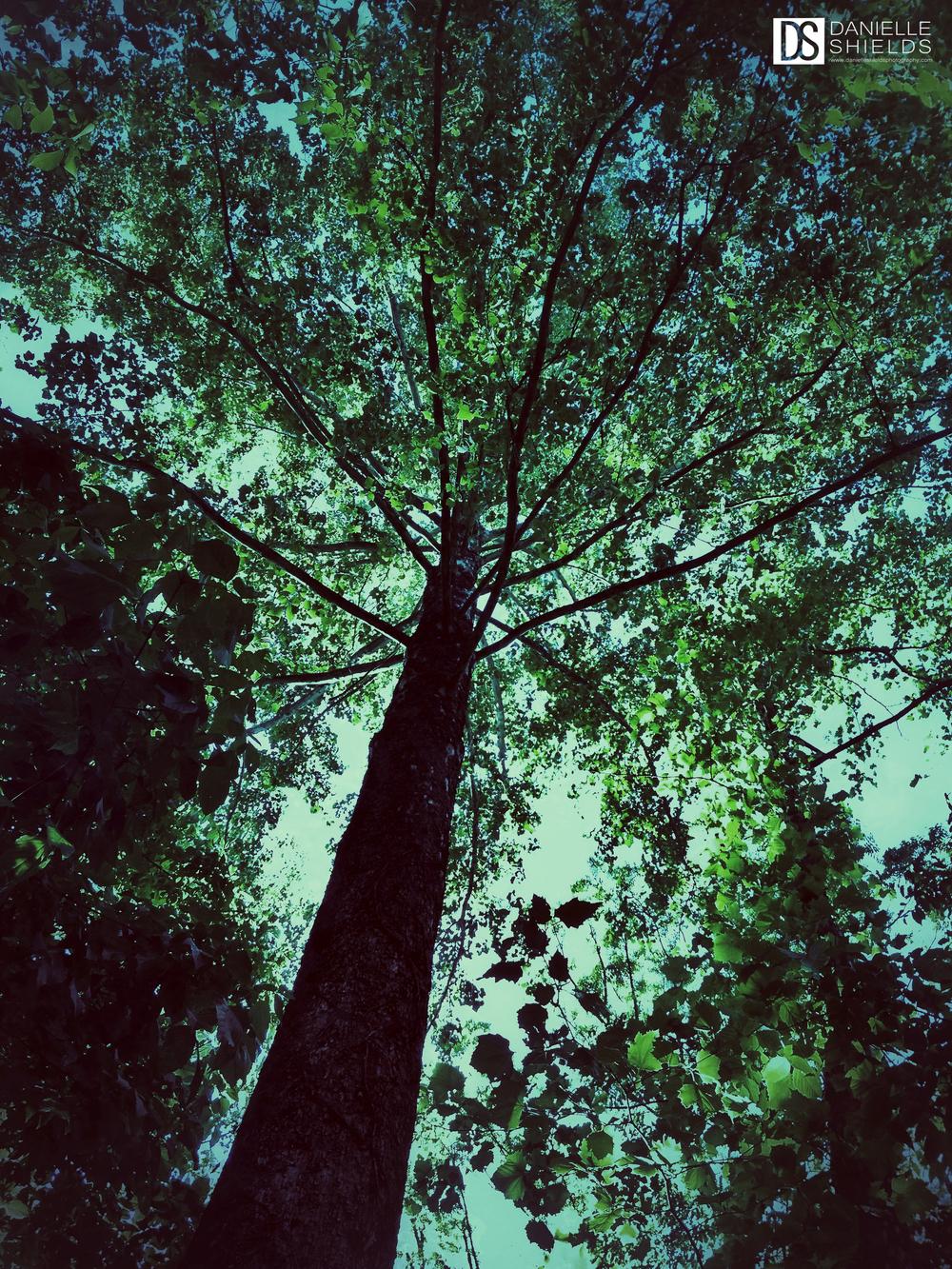 Tree Snap 23.jpg