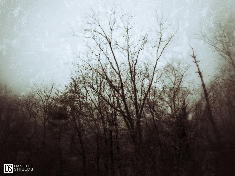 Tree Snap 29.jpg