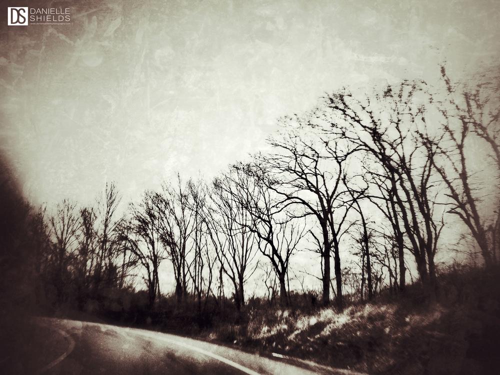 Tree Snap 30.jpg