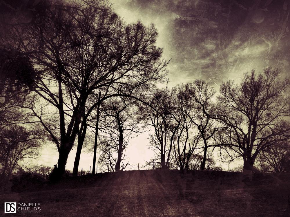 Tree Snap 34.jpg