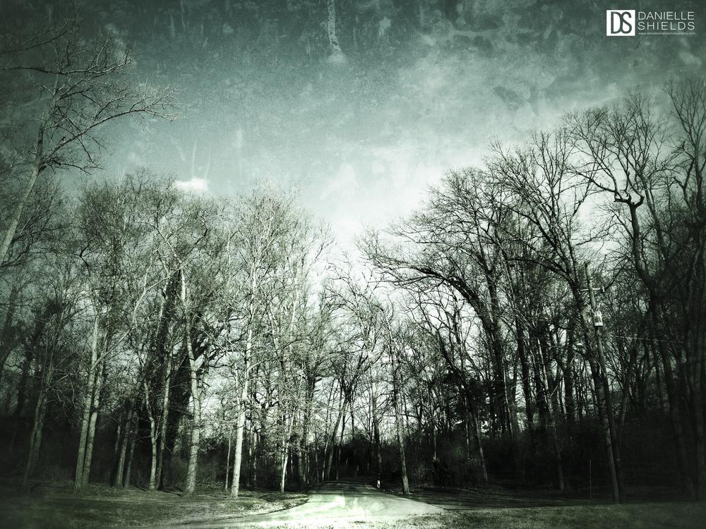 Tree Snap 17.jpg
