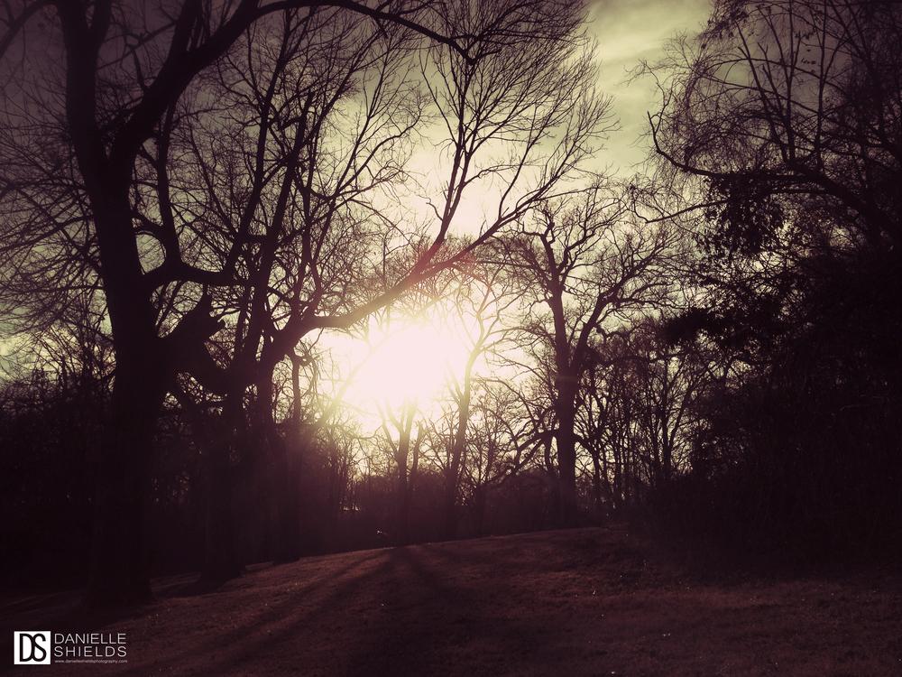 Tree Snap 14.jpg