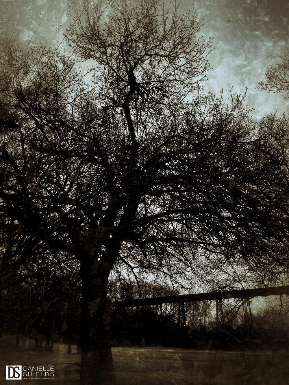 Tree Snap 19.jpg