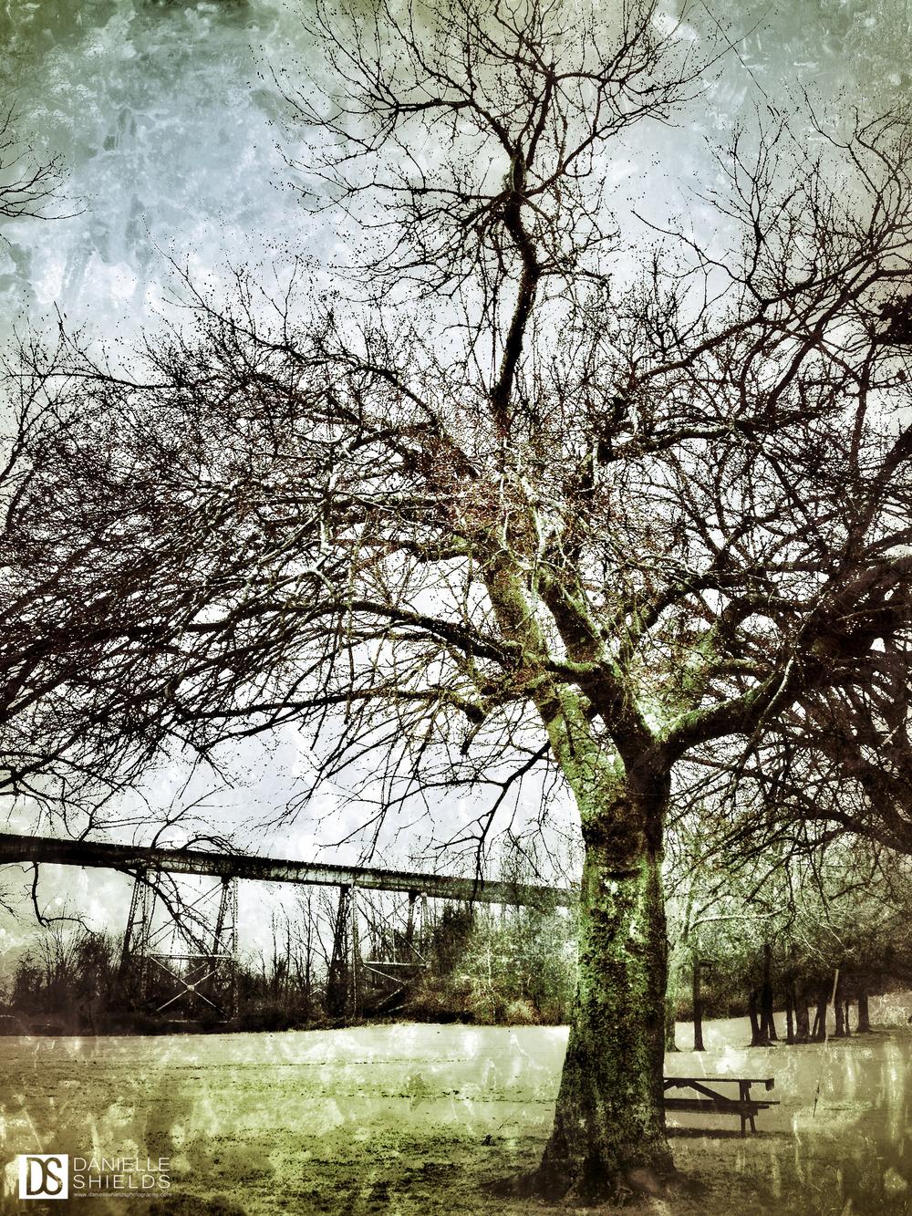 Tree Snap 32.jpg