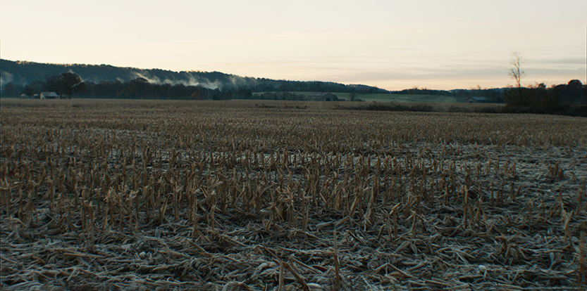 corn field morning.jpg