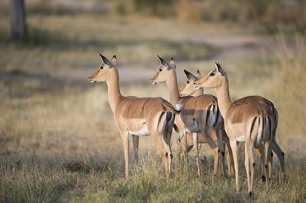"""在南非,几乎每个野生动物保护区都拥有""""非洲五大兽"""""""