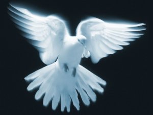 Who is the Holy Spirit of God? Bible answers here.