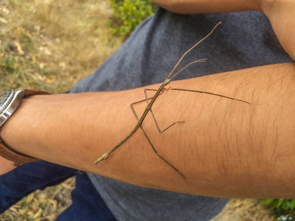 Masanao made a friend out of this stick insect on activities last Friday