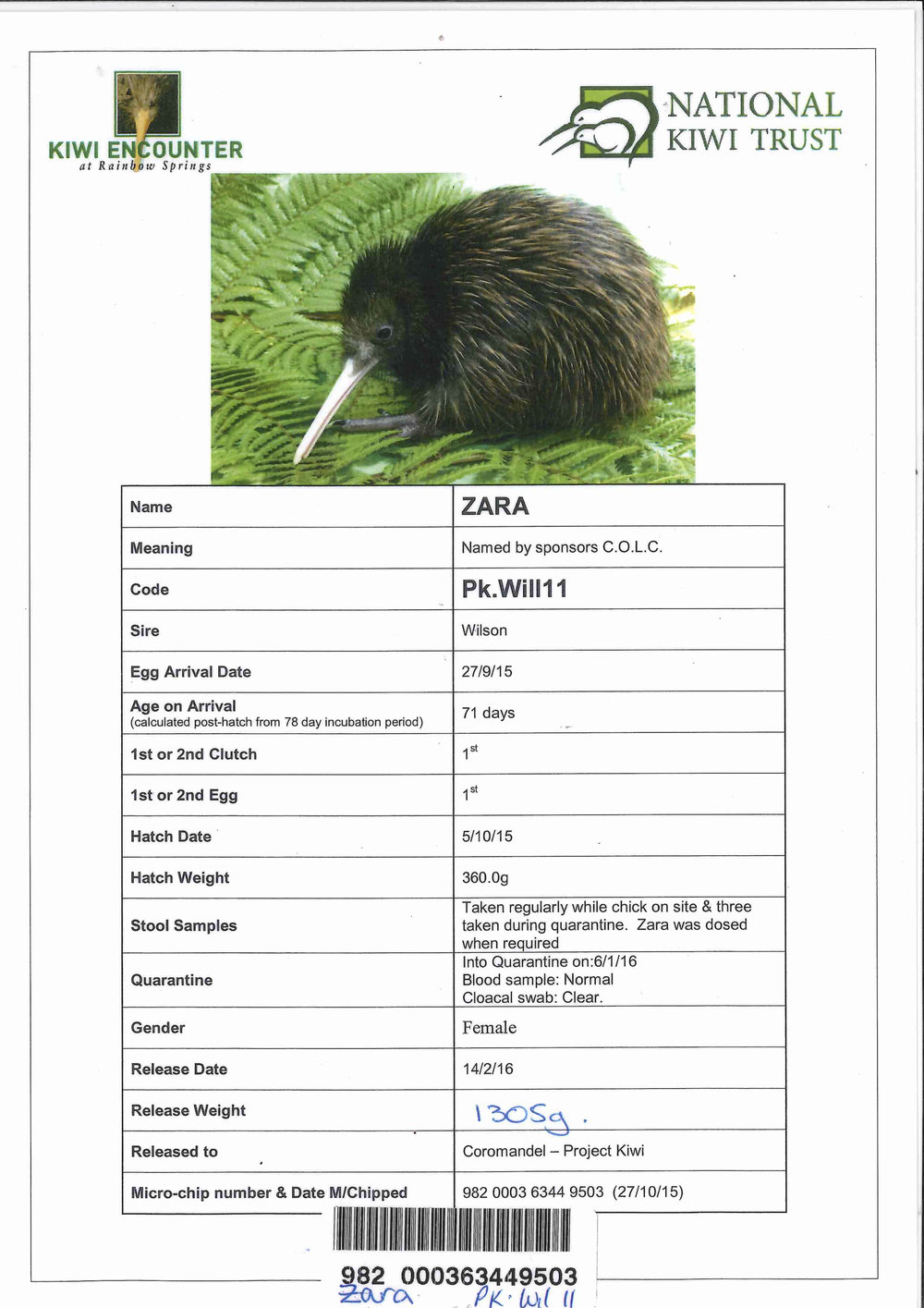 2016 ZARA - COLC's second kiwi