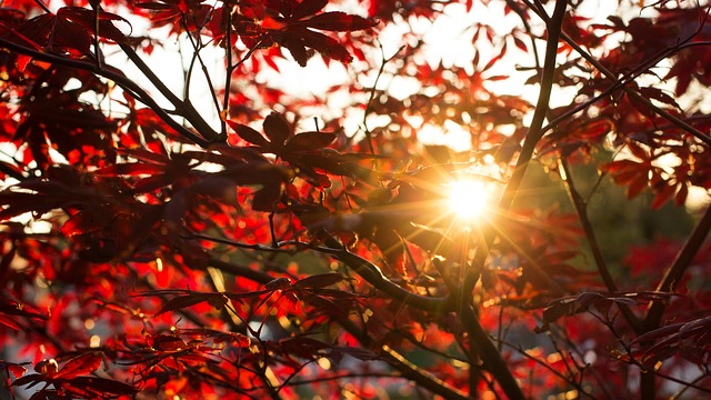 autumn-2808558_640.jpg