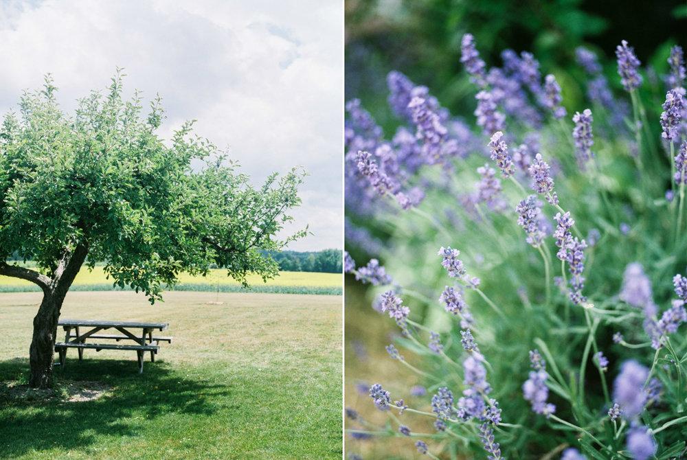 combine_images1.jpg
