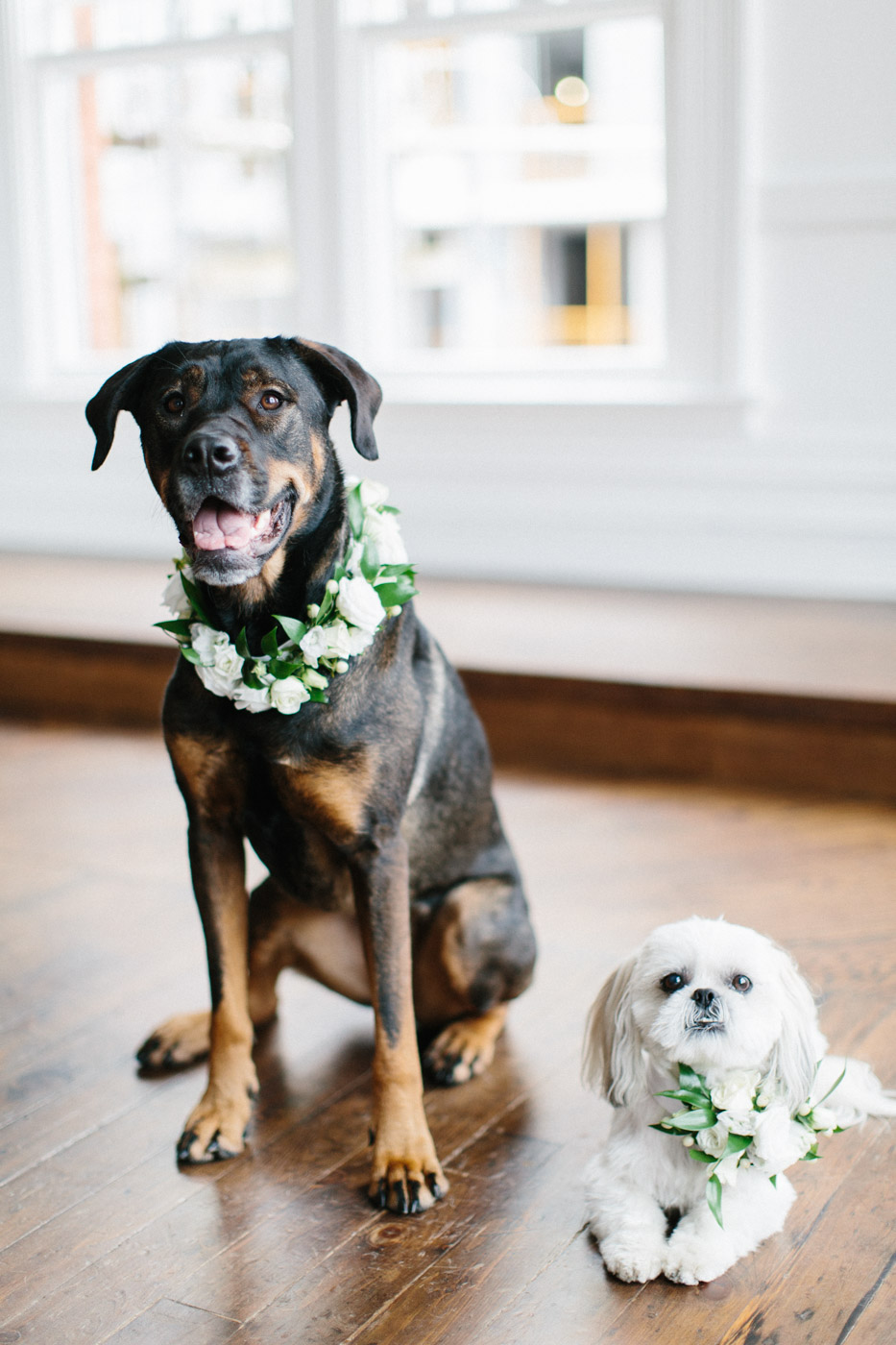 Include_dogs_in_your_wedding_photographs5.jpg