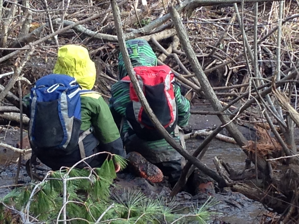 Exploring the beaver dam at Boyd Woods.