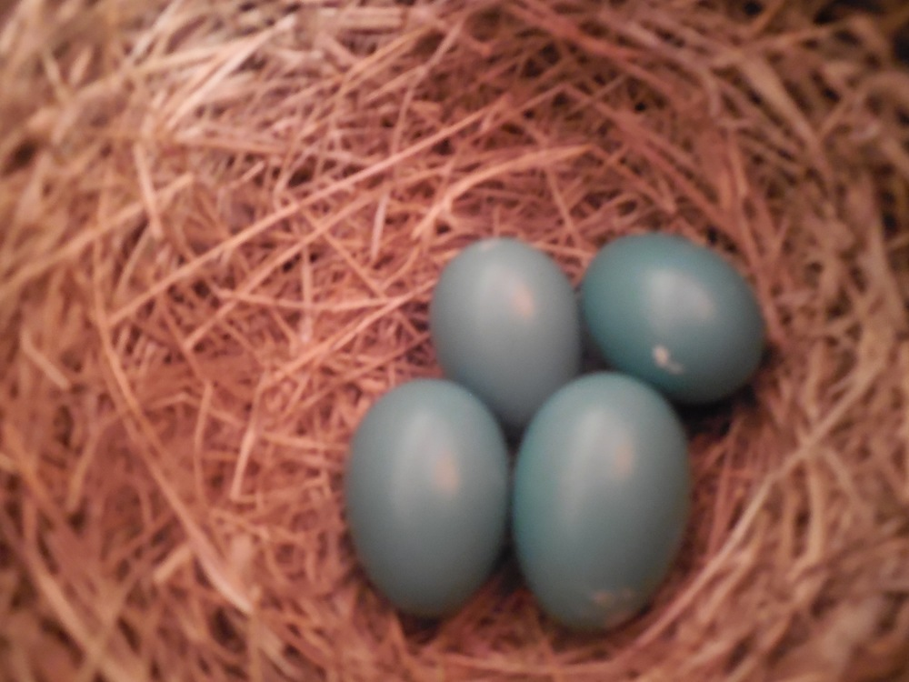 The number of eggs inside increased over a few days