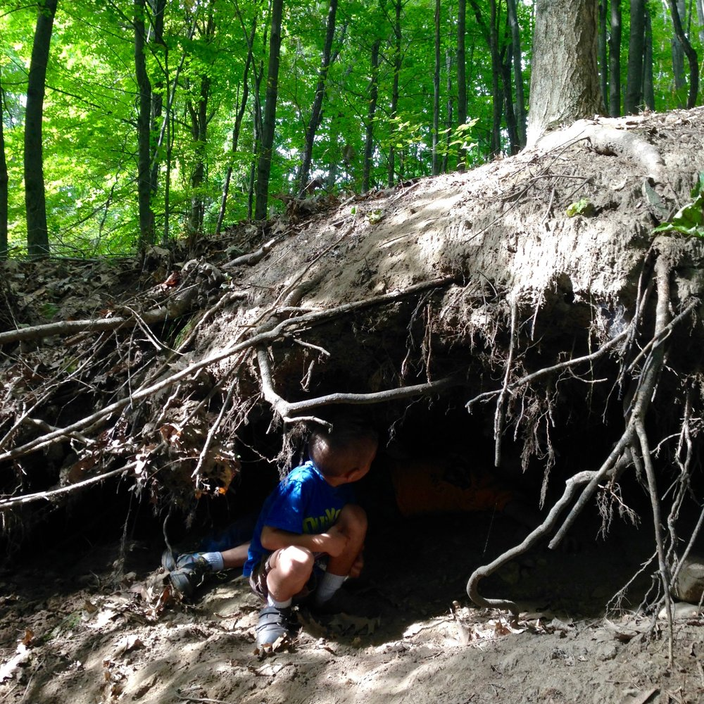 Exploring a root cave in the Dry Stump Gorge.