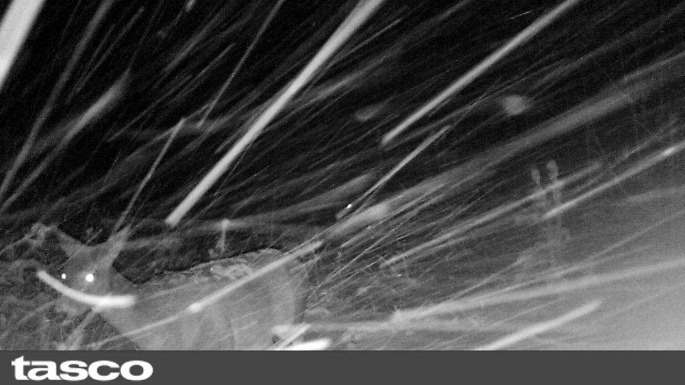 Deer in snow storm