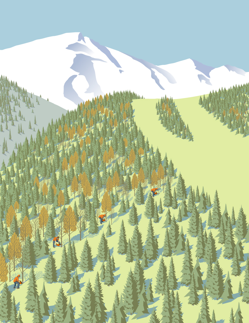 Skiing Magazine - Thinning Glades