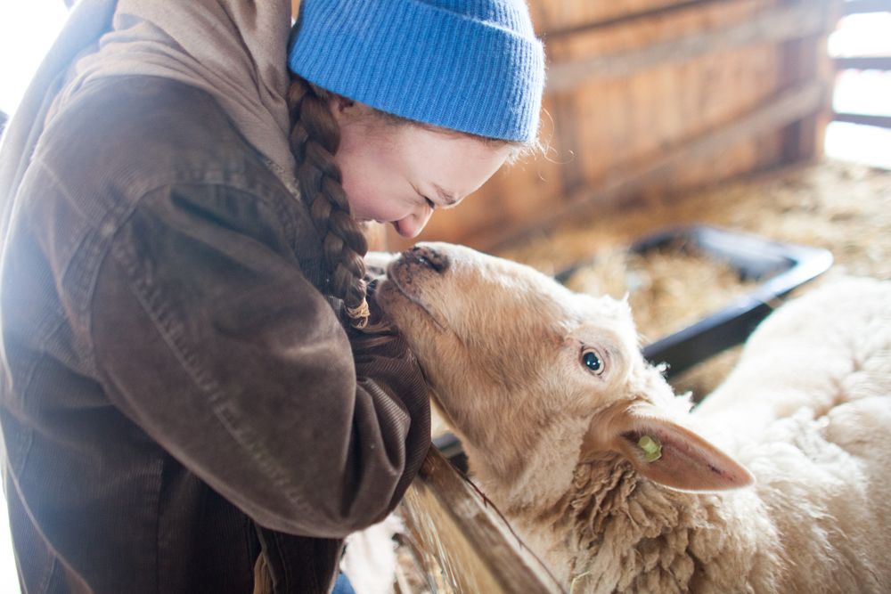 SheepShearing-10.jpg