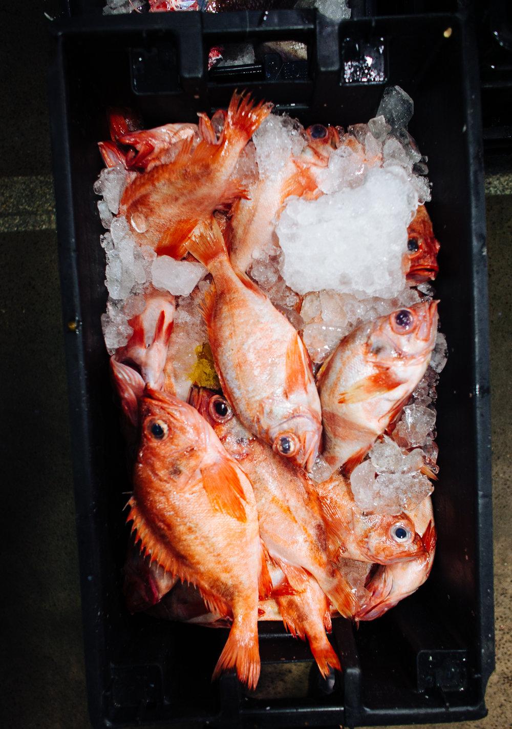 HeatherPhelpsLipton-Fish-HuntsPoint-FultonFishMarket-2.jpg
