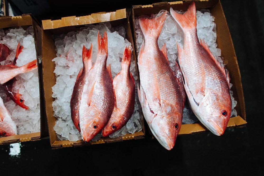 HeatherPhelpsLipton-Fish-HuntsPoint-FultonFishMarket-8.jpg