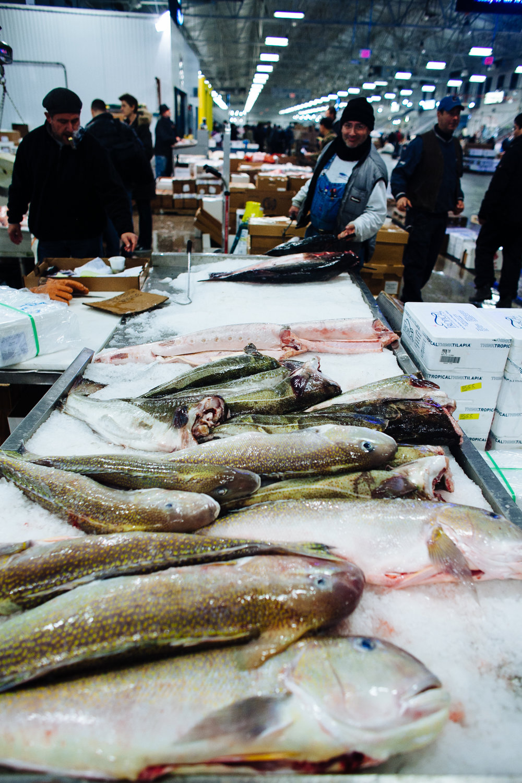 HeatherPhelpsLipton-Fish-HuntsPoint-FultonFishMarket-14.jpg