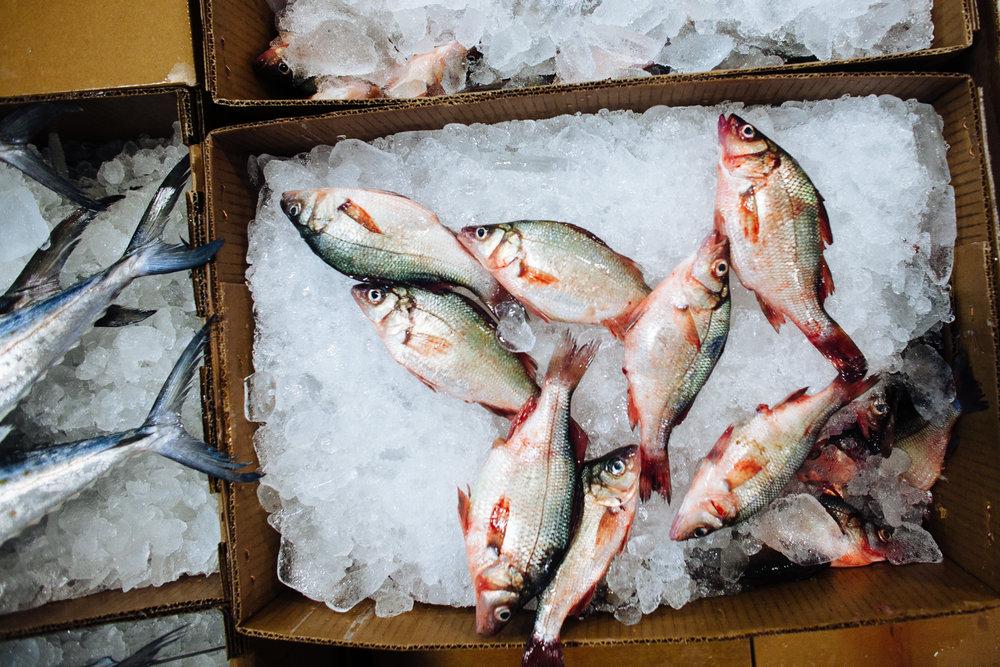 HeatherPhelpsLipton-Fish-HuntsPoint-FultonFishMarket-25.jpg