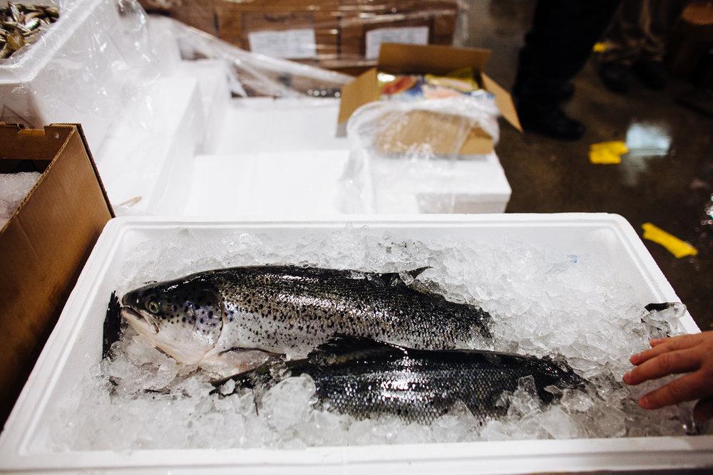 HeatherPhelpsLipton-Fish-HuntsPoint-FultonFishMarket-27.jpg