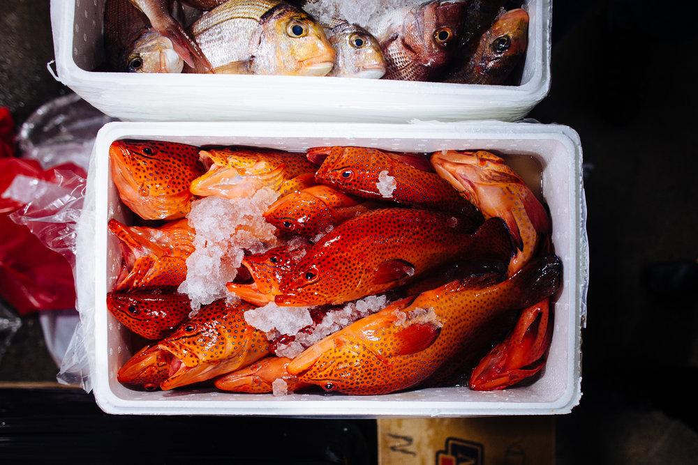HeatherPhelpsLipton-Fish-HuntsPoint-FultonFishMarket-32.jpg