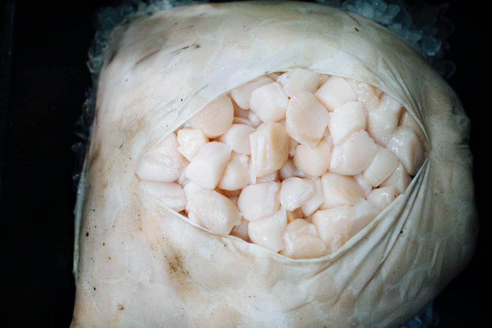 HeatherPhelpsLipton-Fish-HuntsPoint-FultonFishMarket-33.jpg
