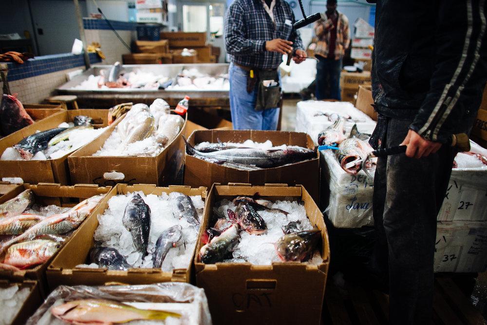 HeatherPhelpsLipton-Fish-HuntsPoint-FultonFishMarket-41.jpg