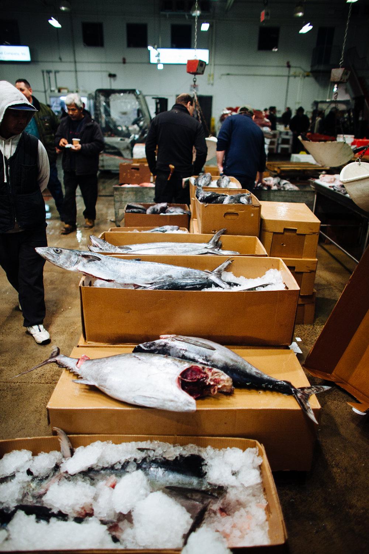 HeatherPhelpsLipton-Fish-HuntsPoint-FultonFishMarket-42.jpg