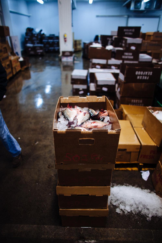 HeatherPhelpsLipton-Fish-HuntsPoint-FultonFishMarket-46.jpg