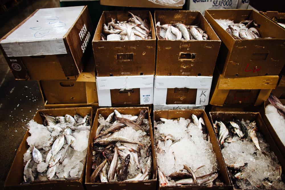 HeatherPhelpsLipton-Fish-HuntsPoint-FultonFishMarket-45.jpg