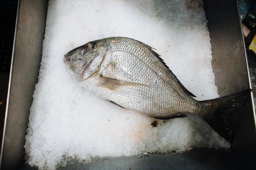 HeatherPhelpsLipton-Fish-HuntsPoint-FultonFishMarket-54.jpg
