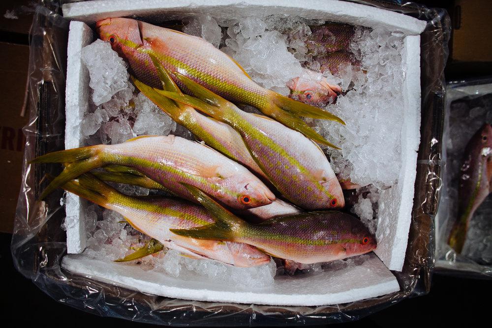 HeatherPhelpsLipton-Fish-HuntsPoint-FultonFishMarket-61.jpg