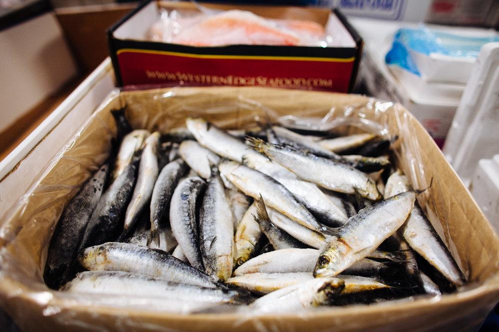 HeatherPhelpsLipton-Fish-HuntsPoint-FultonFishMarket-67.jpg