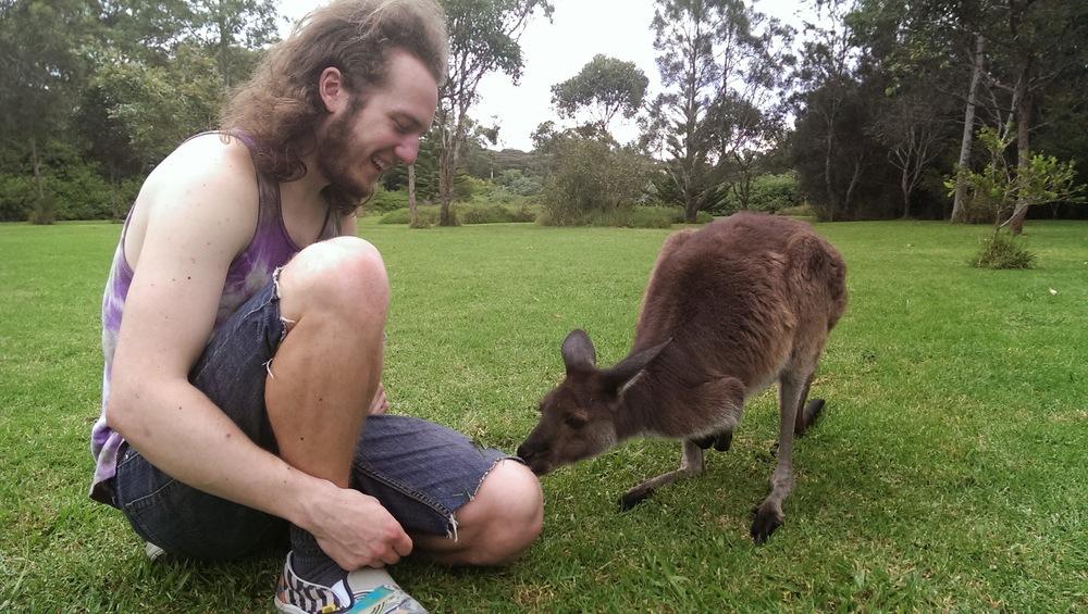 port stephens kangaroo