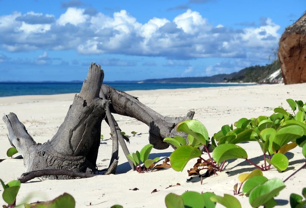 The West Coast - Fraser Island, Australia