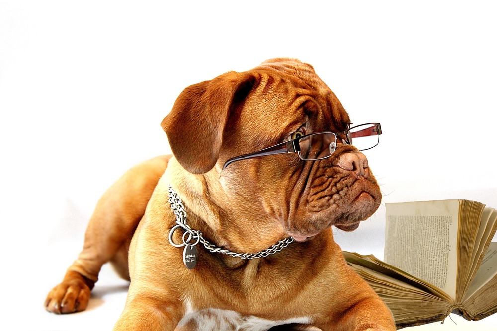 Doggy In Glasses!