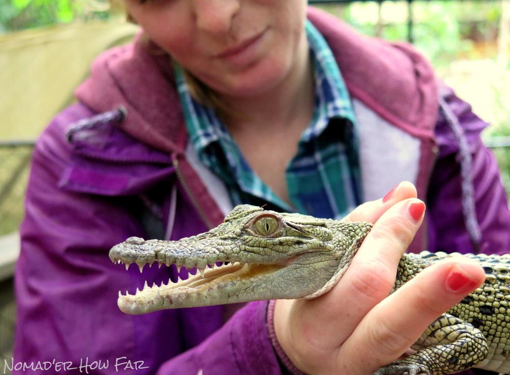 croc holding