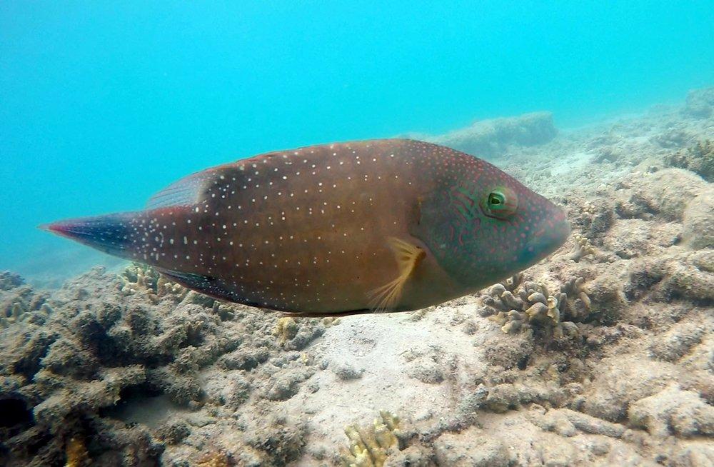 fish cute
