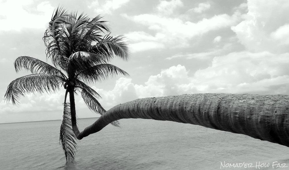 Koh Phangan Palms, Thailand