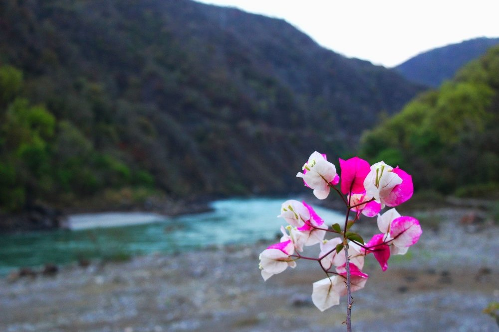 Admiring the Ganges River from Phool Chatti Ashram, Rishikesh, India