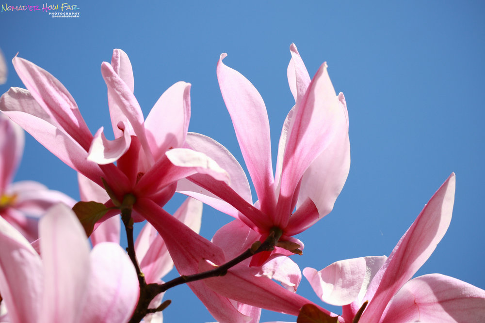 Spring Blossom // UK
