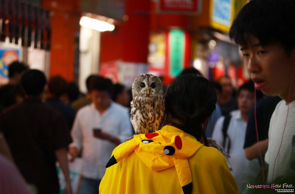 Pikachu's pet owl // Tokyo, Japan