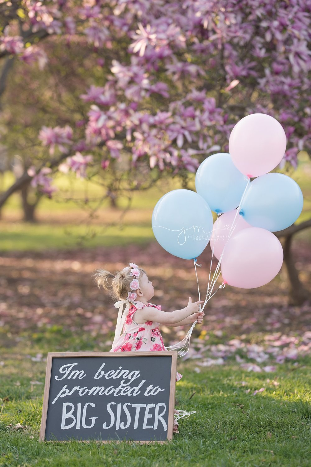 columbus ohio little girls has an exciting announcement to make during family pregnancy reveal photo session